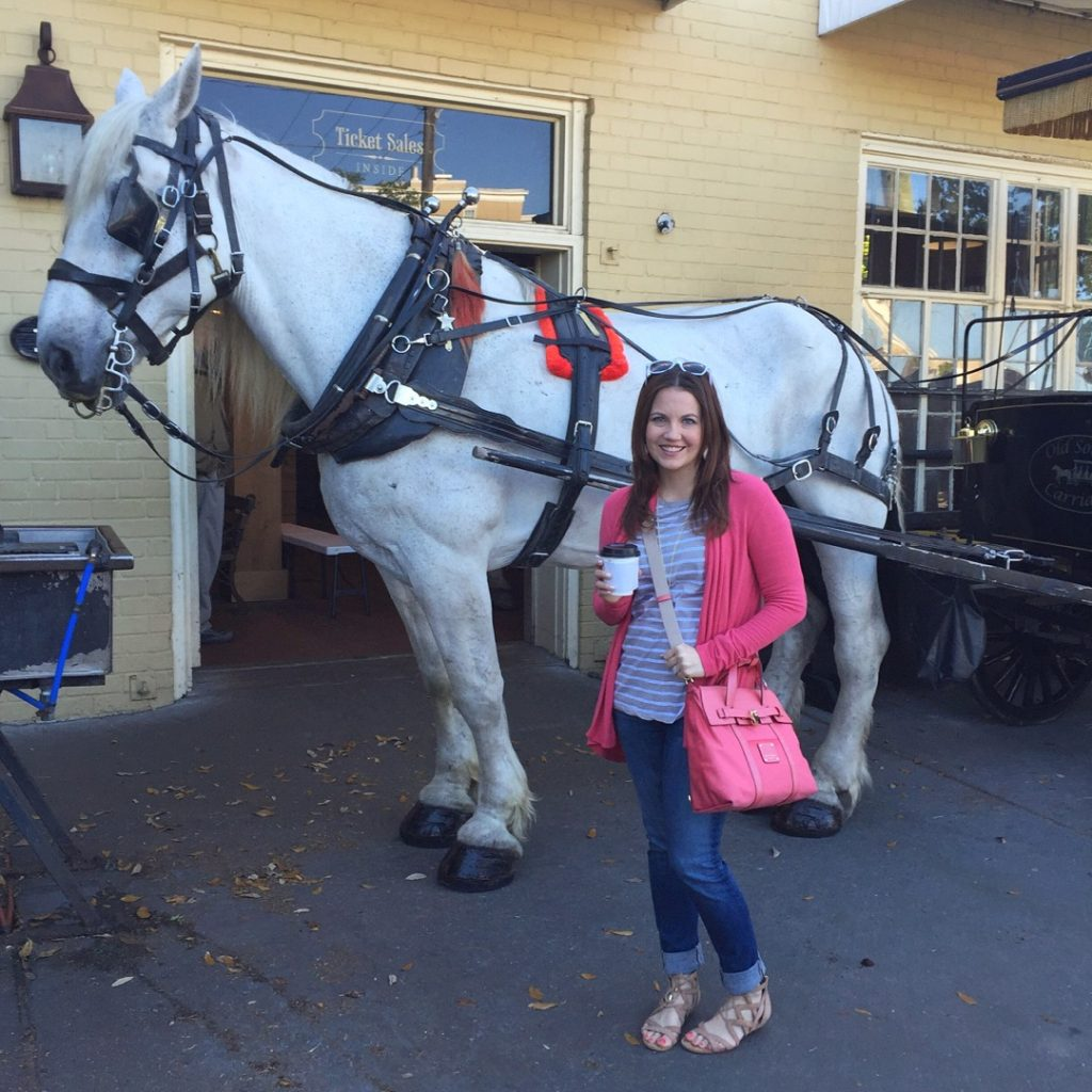 Charleston Carriage Ride - Tour Guide
